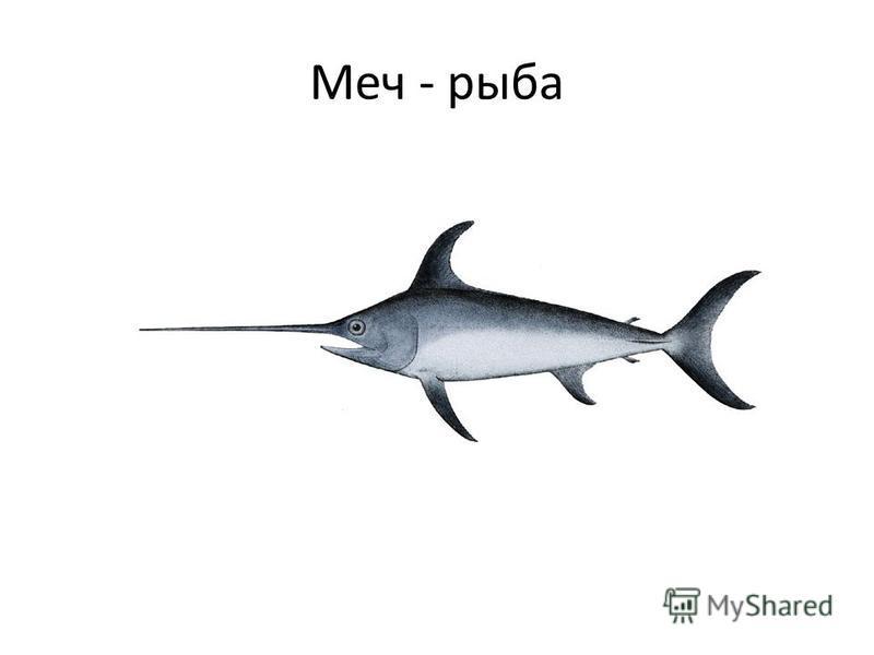 Меч - рыба