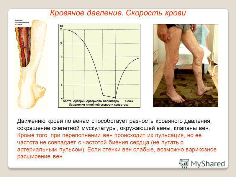 Кровяное давление. Скорость крови Движению крови по венам способствует разность кровяного давления, сокращение скелетной мускулатуры, окружающей вены, клапаны вен. Кроме того, при переполнении вен происходит их пульсация, но ее частота не совпадает с