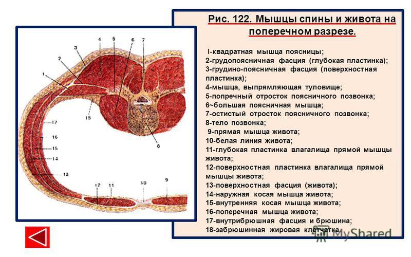 tantricheskiy-massazh-bez-intima