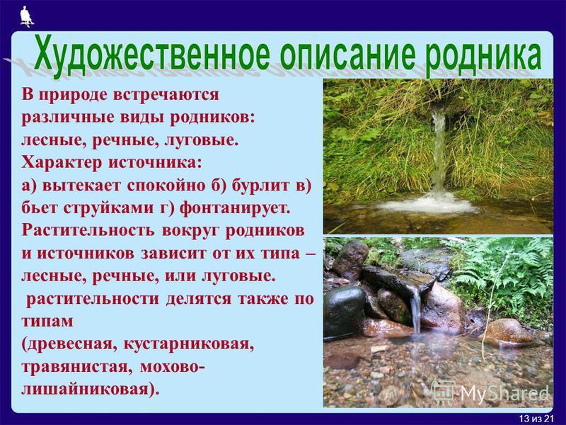 13 из 21 В природе встречаются различные виды родников: лесные, речные, луговые. Характер источника: а) вытекает спокойно б) бурлит в) бьет струйками г) фонтанирует. Растительность вокруг родников и источников зависит от их типа – лесные, речные, или