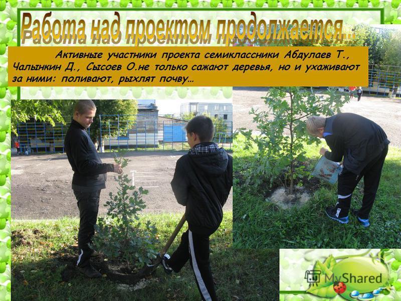 Активные участники проекта семиклассники Абдулаев Т., Чалынкин Д., Сысоев О.не только сажают деревья, но и ухаживают за ними: поливают, рыхлят почву…