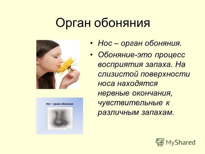 Орган обоняния Нос – орган обоняния. Обоняние-это процесс восприятия запаха. На слизистой поверхности носа находятся нервные окончания, чувствительные к различным запахам.