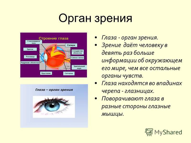 Доклад на тему органы чувств человека зрение 5249