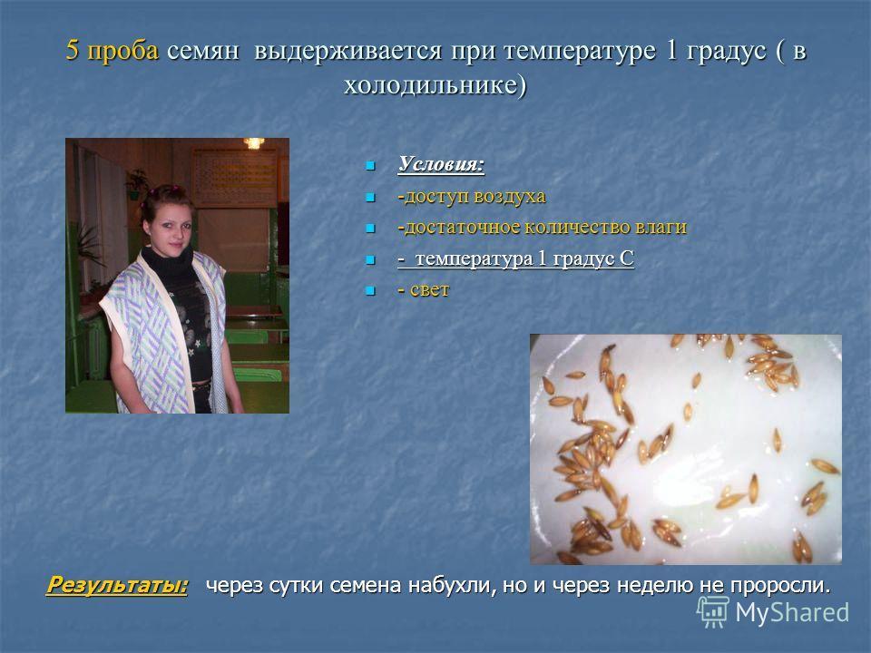 5 проба семян выдерживается при температуре 1 градус ( в холодильнике) Условия: Условия: -доступ воздуха -доступ воздуха -достаточное количество влаги -достаточное количество влаги - температура 1 градус С - температура 1 градус С - свет - свет Резул