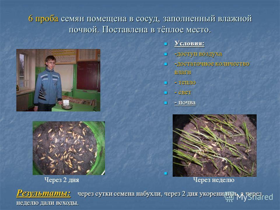6 проба семян помещена в сосуд, заполненный влажной почвой. Поставлена в тёплое место. Условия: Условия: -доступ воздуха -доступ воздуха -достаточное количество влаги -достаточное количество влаги - тепло - тепло - свет - свет - почва - почва Результ