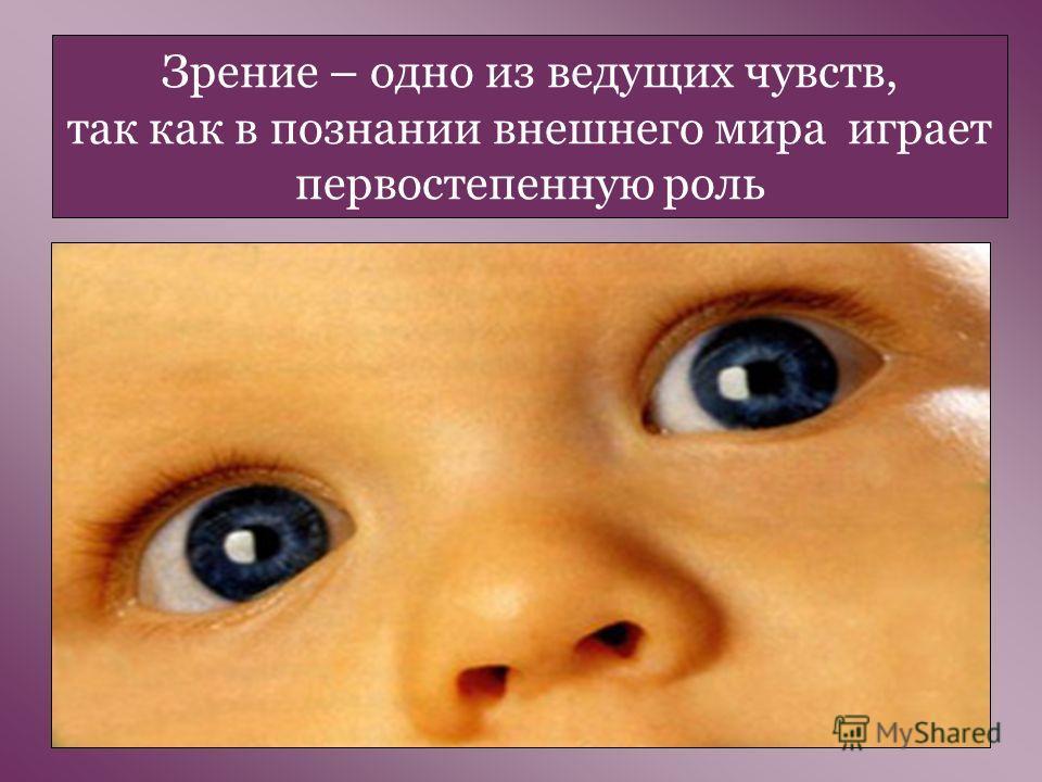 Зрение – одно из ведущих чувств, так как в познании внешнего мира играет первостепенную роль