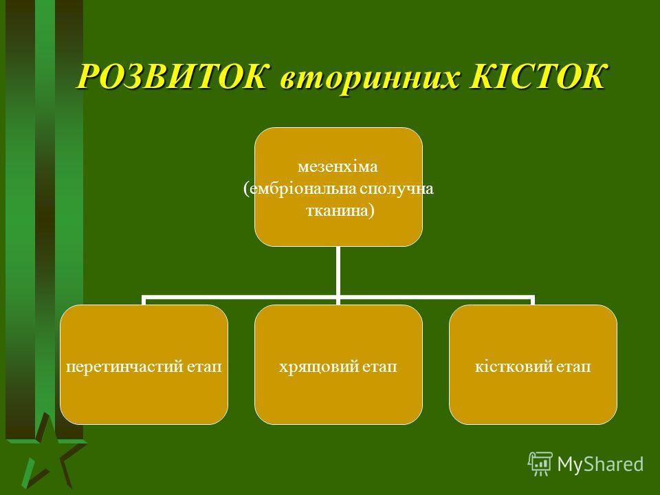 РОЗВИТОК вторинних КІСТОК мезенхіма (ембріональна сполучна тканина) перетинчастий етапхрящовий етапкістковий етап