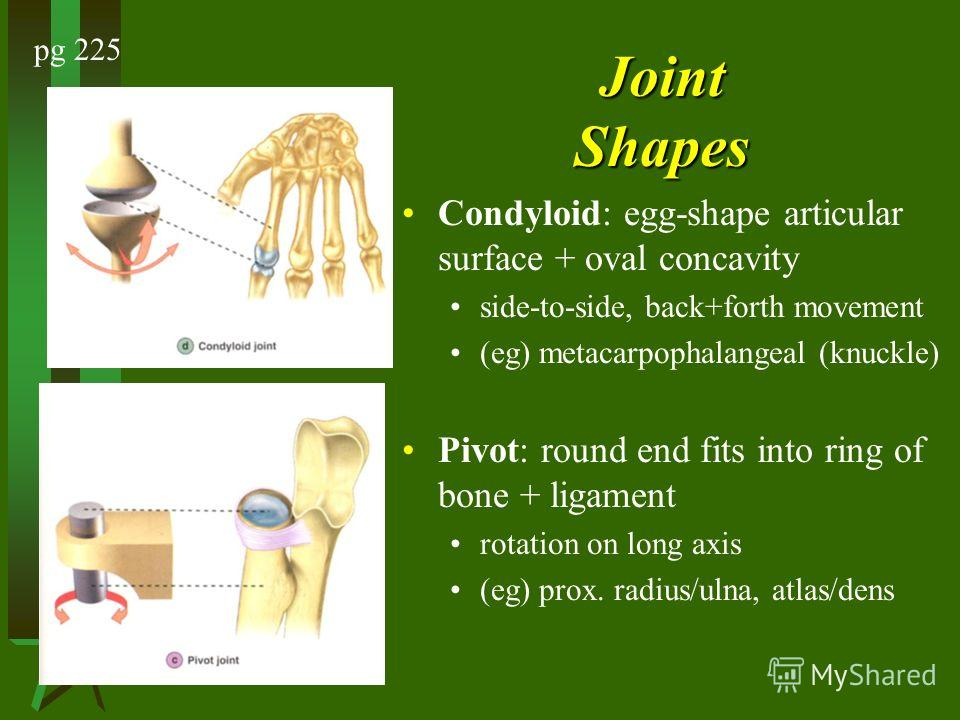 Joint Shapes Condyloid: egg-shape articular surface + oval concavity side-to-side, back+forth movement (eg) metacarpophalangeal (knuckle) Pivot: round end fits into ring of bone + ligament rotation on long axis (eg) prox. radius/ulna, atlas/dens pg 2