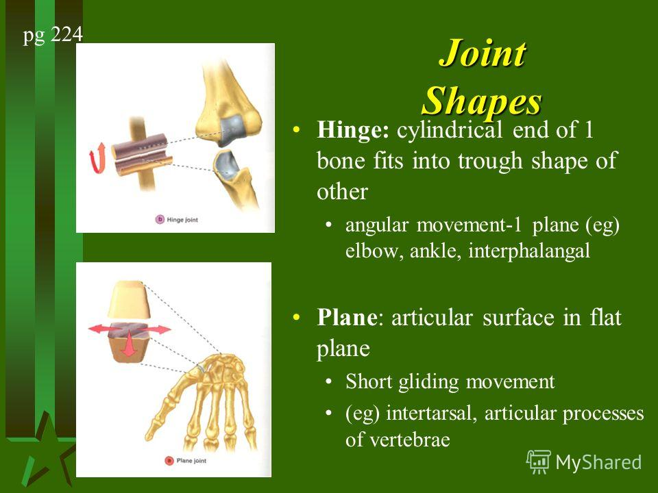 Joint Shapes Hinge: cylindrical end of 1 bone fits into trough shape of other angular movement-1 plane (eg) elbow, ankle, interphalangal Plane: articular surface in flat plane Short gliding movement (eg) intertarsal, articular processes of vertebrae