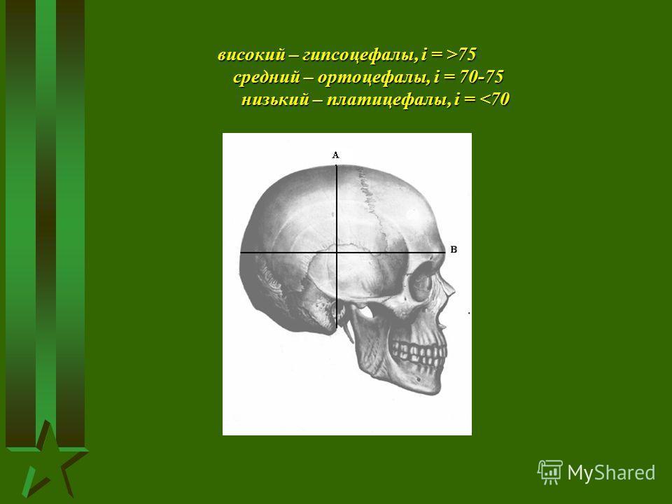 високий – гипсоцефалы, і = >75 средний – ортоцефалы, і = 70-75 низький – платицефалы, і = 75 средний – ортоцефалы, і = 70-75 низький – платицефалы, і =