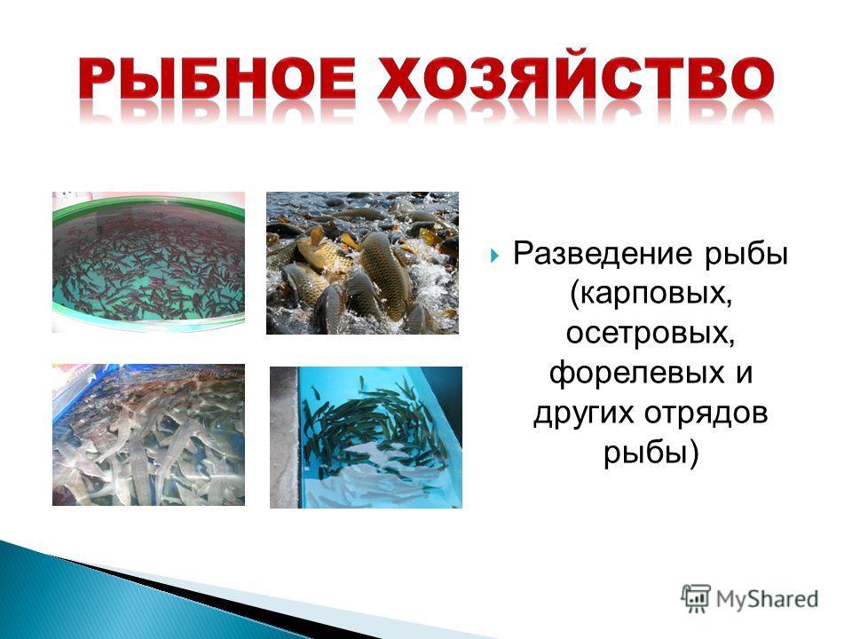Разведение рыбы (карповых, осетровых, форелевых и других отрядов рыбы)