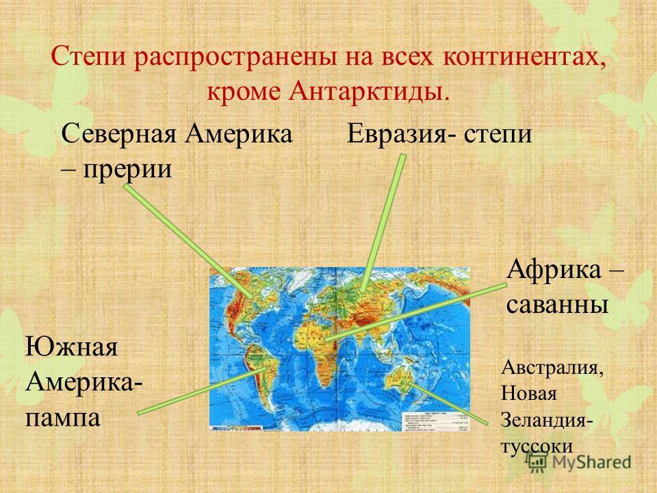 Степи распространены на всех континентах, кроме Антарктиды. Евразия- степи Северная Америка – прерии Южная Америка- пампа Африка – саванны Австралия, Новая Зеландия- туссоки