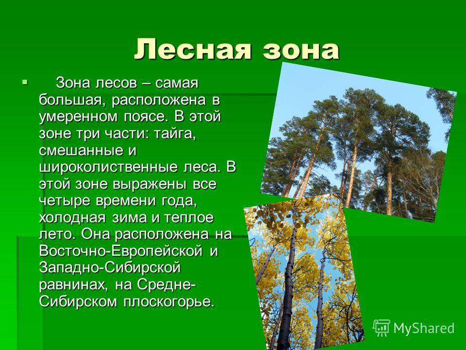 Лесная зона Зона лесов – самая большая, расположена в умеренном поясе. В этой зоне три части: тайга, смешанные и широколиственные леса. В этой зоне выражены все четыре времени года, холодная зима и теплое лето. Она расположена на Восточно-Европейской