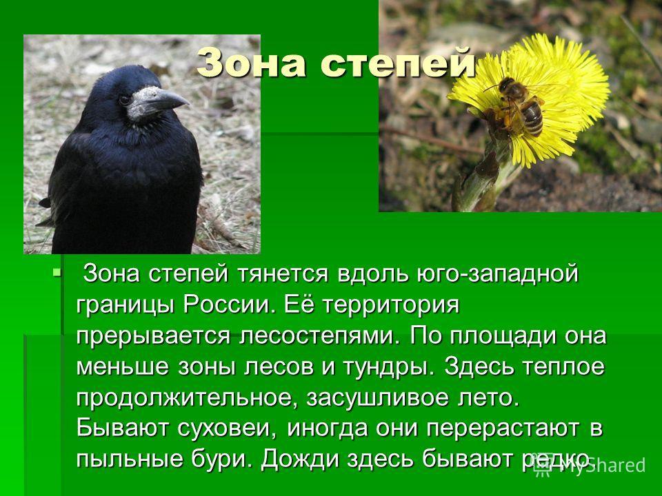 Зона степей Зона степей тянется вдоль юго-западной границы России. Её территория прерывается лесостепями. По площади она меньше зоны лесов и тундры. Здесь теплое продолжительное, засушливое лето. Бывают суховеи, иногда они перерастают в пыльные бури.