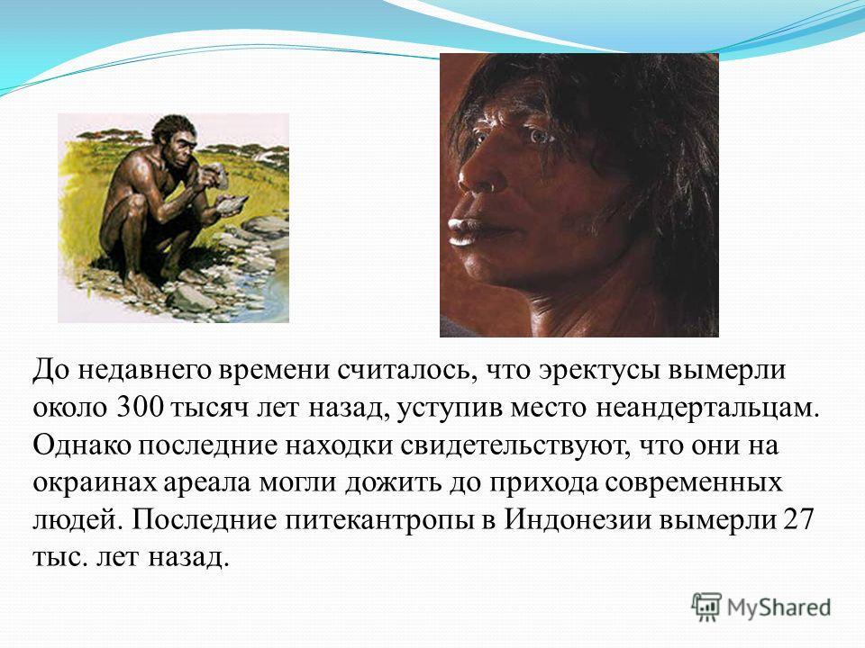 До недавнего времени считалось, что эректусы вымерли около 300 тысяч лет назад, уступив место неандертальцам. Однако последние находки свидетельствуют, что они на окраинах ареала могли дожить до прихода современных людей. Последние питекантропы в Инд