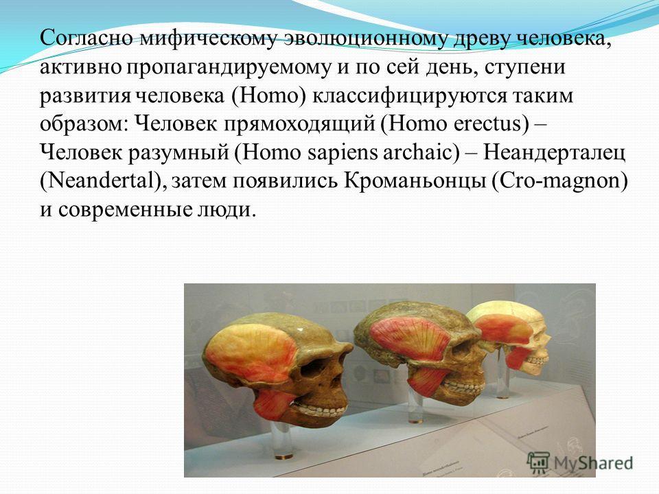 Согласно мифическому эволюционному древу человека, активно пропагандируемому и по сей день, ступени развития человека (Homo) классифицируются таким образом: Человек прямоходящий (Homo erectus) – Человек разумный (Homo sapiens archaic) – Неандерталец