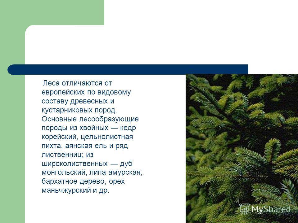 Леса отличаются от европейских по видовому составу древесных и кустарниковых пород. Основные лесообразующие породы из хвойных кедр корейский, цельнолистная пихта, аянская ель и ряд лиственниц; из широколиственных дуб монгольский, липа амурская, барха