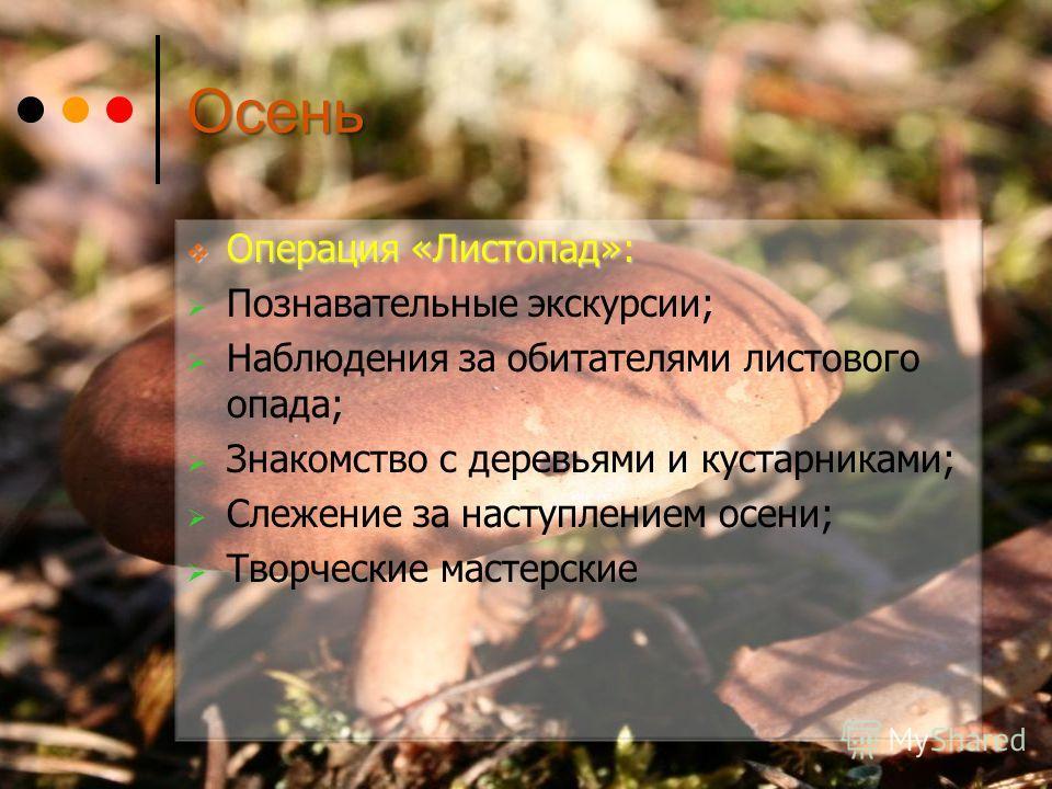 Осень Операция «Листопад»: Операция «Листопад»: Познавательные экскурсии; Наблюдения за обитателями листового опада; Знакомство с деревьями и кустарниками; Слежение за наступлением осени; Творческие мастерские