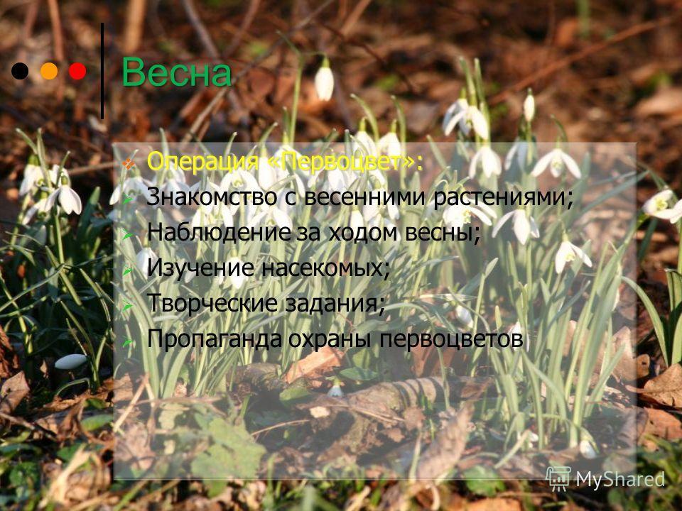 Весна Операция «Первоцвет»: Операция «Первоцвет»: Знакомство с весенними растениями; Наблюдение за ходом весны; Изучение насекомых; Творческие задания; Пропаганда охраны первоцветов