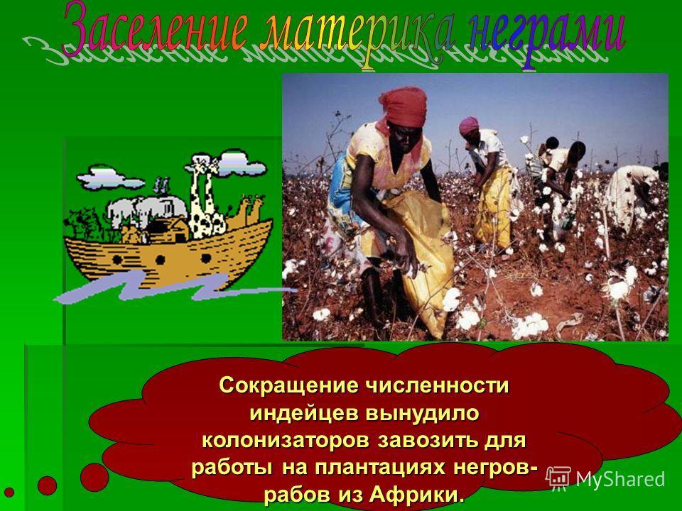 Сокращение численности индейцев вынудило колонизаторов завозить для работы на плантациях негров- рабов из Африки.