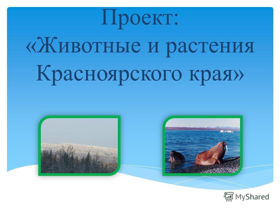 Проект: «Животные и растения Красноярского края»