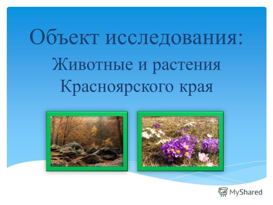 Объект исследования: Животные и растения Красноярского края