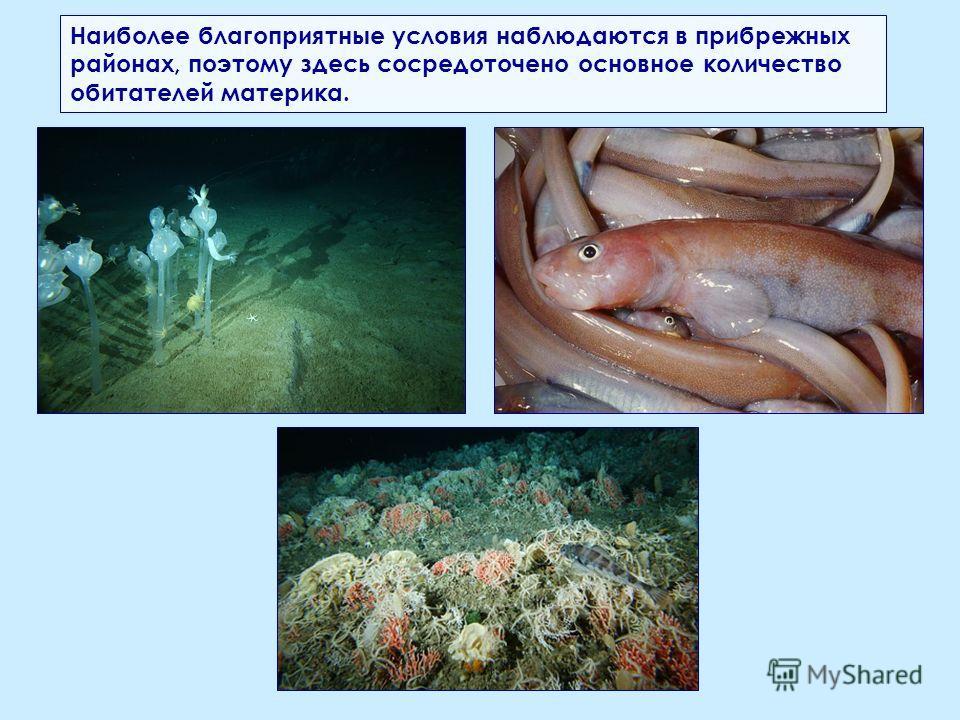 Наиболее благоприятные условия наблюдаются в прибрежных районах, поэтому здесь сосредоточено основное количество обитателей материка.