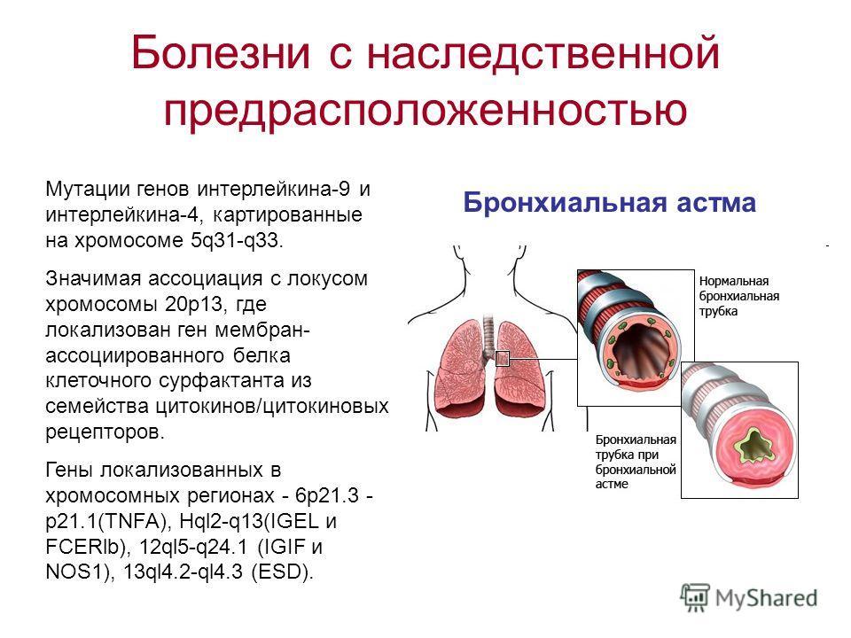 Болезни с наследственной предрасположенностью Бронхиальная астма Мутации генов интерлейкина-9 и интерлейкина-4, картированные на хромосоме 5q31-q33. Значимая ассоциация с локусом хромосомы 20 р 13, где локализован ген мембран- ассоциированного белка