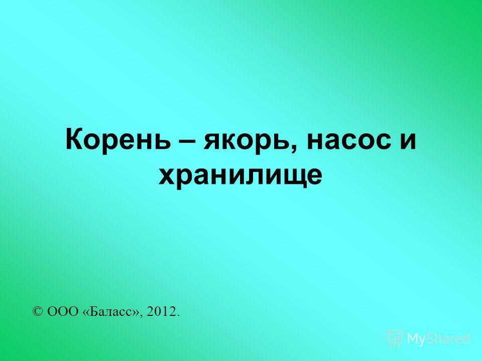 Корень – якорь, насос и хранилище © ООО «Баласс», 2012.