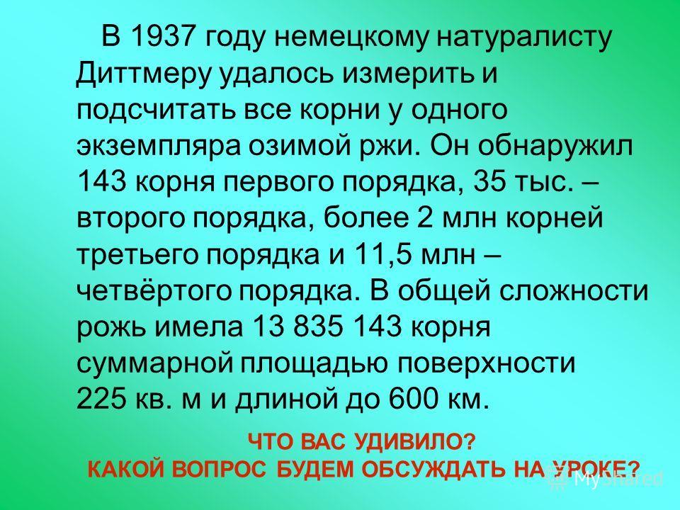В 1937 году немецкому натуралисту Диттмеру удалось измерить и подсчитать все корни у одного экземпляра озимой ржи. Он обнаружил 143 корня первого порядка, 35 тыс. – второго порядка, более 2 млн корней третьего порядка и 11,5 млн – четвёртого порядка.