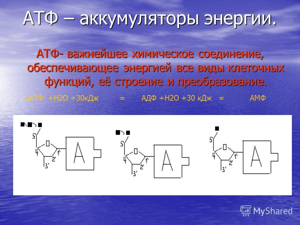 АТФ – аккумуляторы энергии. АТФ- важнейшее химическое соединение, обеспечивающее энергией все виды клеточных функций, её строение и преобразование. АТФ +Н2О +30 к Дж = АДФ +Н2О +30 к Дж = АМФ