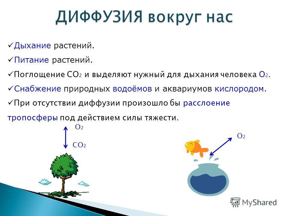 Дыхание растений. Питание растений. Поглощение CO 2 и выделяют нужный для дыхания человека O 2. Снабжение природных водоёмов и аквариумов кислородом. При отсутствии диффузии произошло бы расслоение тропосферы под действием силы тяжести. CO 2 O2O2 O2O
