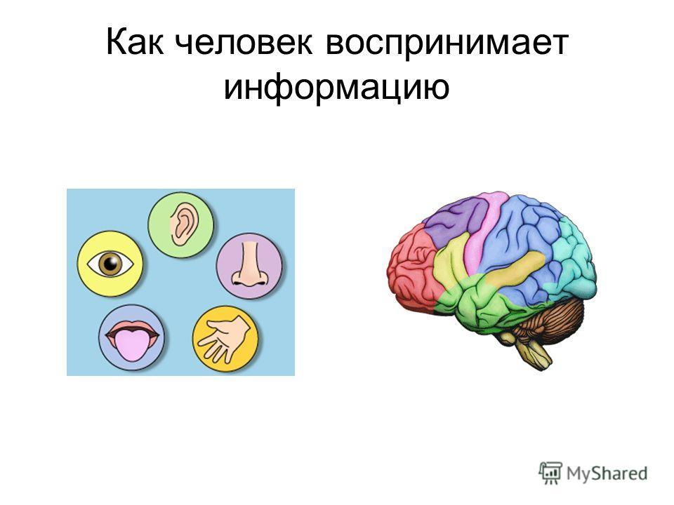 Как человек воспринимает информацию