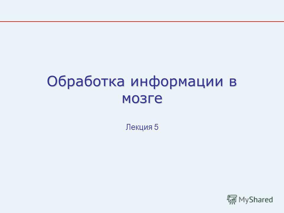 Обработка информации в мозге Лекция 5