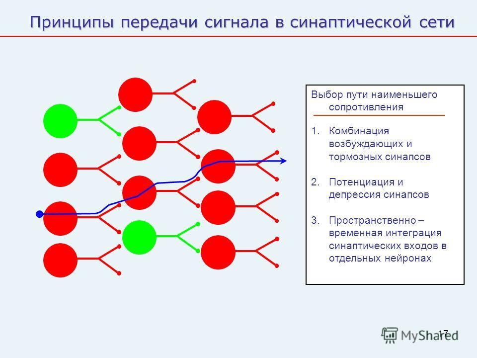 17 Принципы передачи сигнала в синаптической сети Выбор пути наименьшего сопротивления 1. Комбинация возбуждающих и тормозных синапсов 2. Потенциация и депрессия синапсов 3. Пространственно – временная интеграция синаптических входов в отдельных нейр