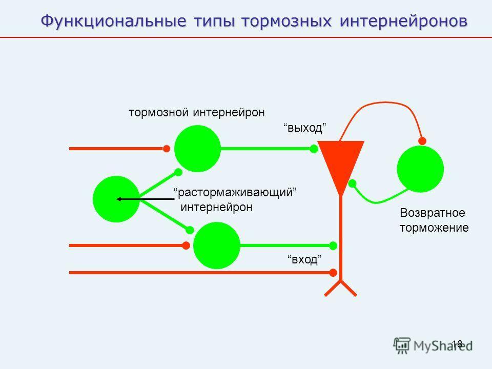 18 Функциональные типы тормозных интернейронов выход вход Возвратное торможение растормаживающий интернейрон тормозной интернейрон