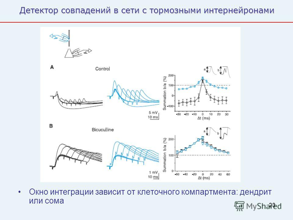 23 Детектор совпадений в сети с тормозными интернейронами Окно интеграции зависит от клеточного компартимента: дендрит или сома