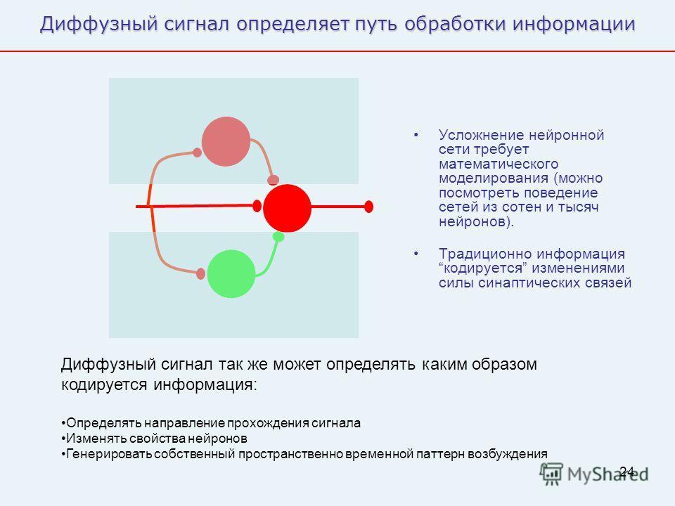 24 Диффузный сигнал определяет путь обработки информации Усложнение нейронной сети требует математического моделирования (можно посмотреть поведение сетей из сотен и тысяч нейронов). Традиционно информация кодируется изменениями силы синаптических св
