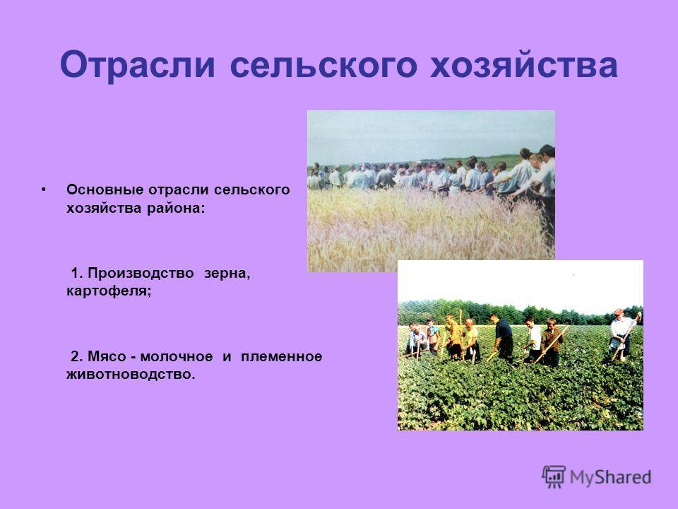 Отрасли сельского хозяйства Основные отрасли сельского хозяйства района: 1. Производство зерна, картофеля; 2. Мясо - молочное и племенное животноводство.