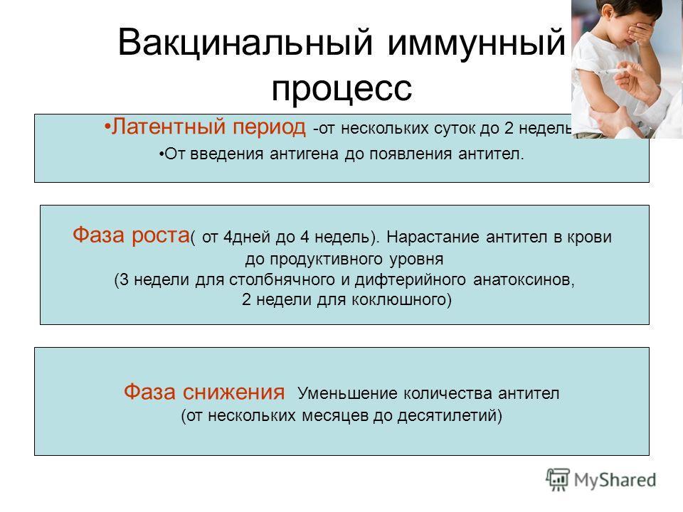 Вакцинальный иммунный процесс Латентный период -от нескольких суток до 2 недель. От введения антигена до появления антител. Фаза роста ( от 4 дней до 4 недель). Нарастание антител в крови до продуктивного уровня (3 недели для столбнячного и дифтерийн
