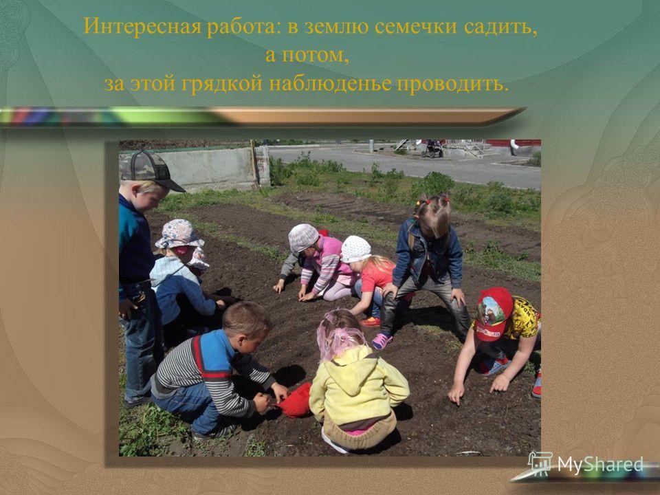 Интересная работа: в землю семечки садить, а потом, за этой грядкой наблюденье проводить.