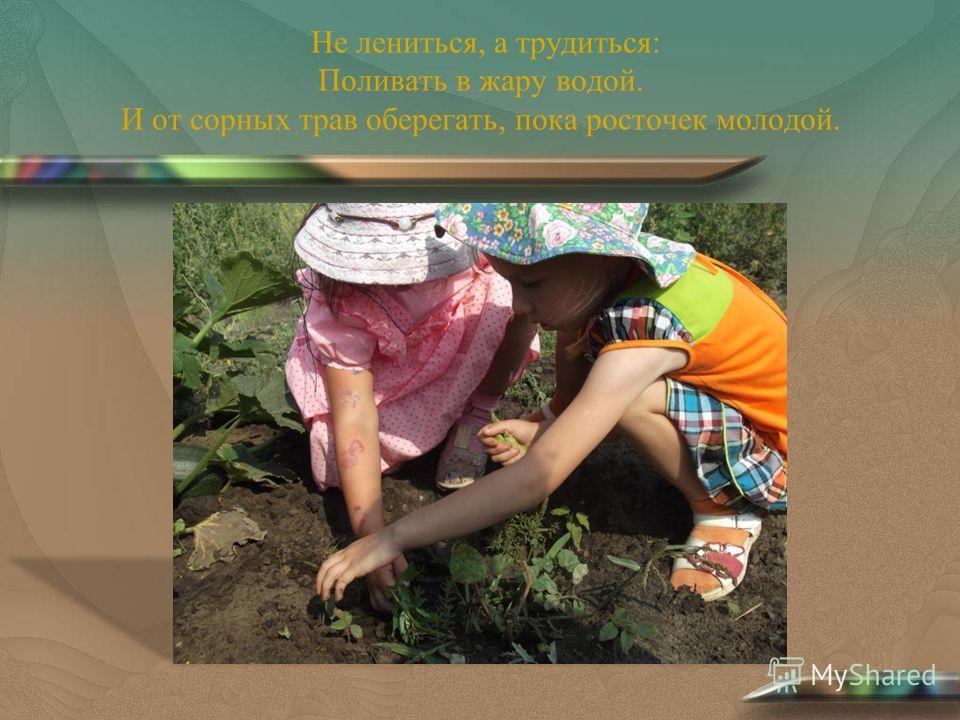 Не лениться, а трудиться: Поливать в жару водой. И от сорных трав оберегать, пока росточек молодой.