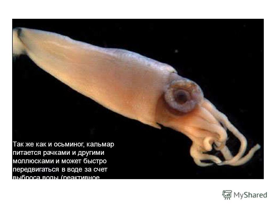 Так же как и осьминог, кальмар питается рачками и другими моллюсками и может быстро передвигаться в воде за счет выброса воды (реактивное движение) и даже выпрыгивать из воды. Так же как и осьминог, кальмар питается рачками и другими моллюсками и мож