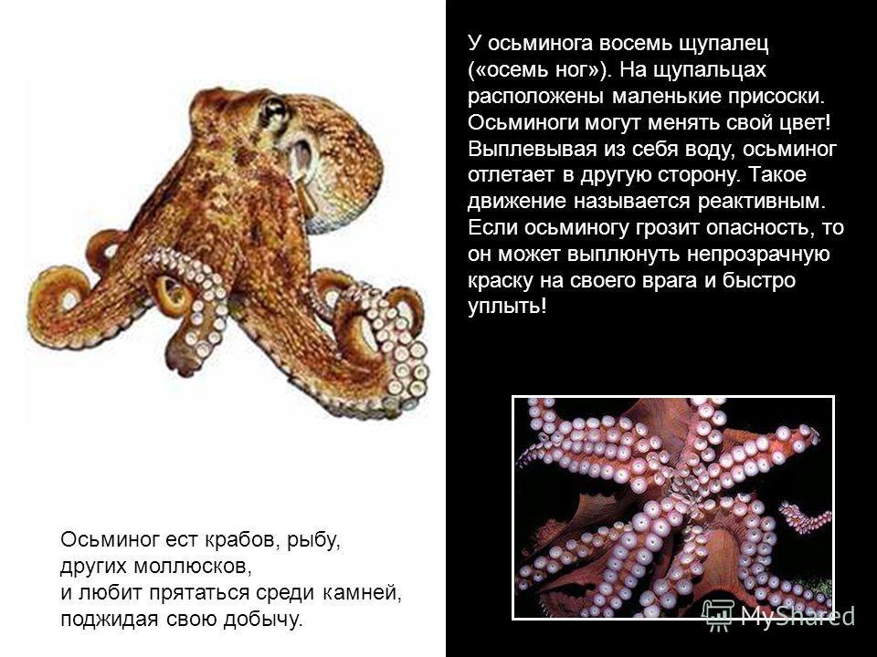 У осьминога вввосемь щупалец («ввосемь ног»). На щупальцах расположены маленькие присоски. Осьминоги могут менять свой цвет! Выплевывая из себя воду, осьминог отлетает в другую сторону. Такое движение называется реактивным. Если осьминогу грозит опас