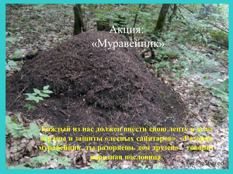 Акция: «Муравейник» Каждый из нас должен внести свою лепту в дело охраны и защиты «лесных санитаров». «Разоряя муравейник, ты разоряешь дом друзей» – говорит народная пословица.