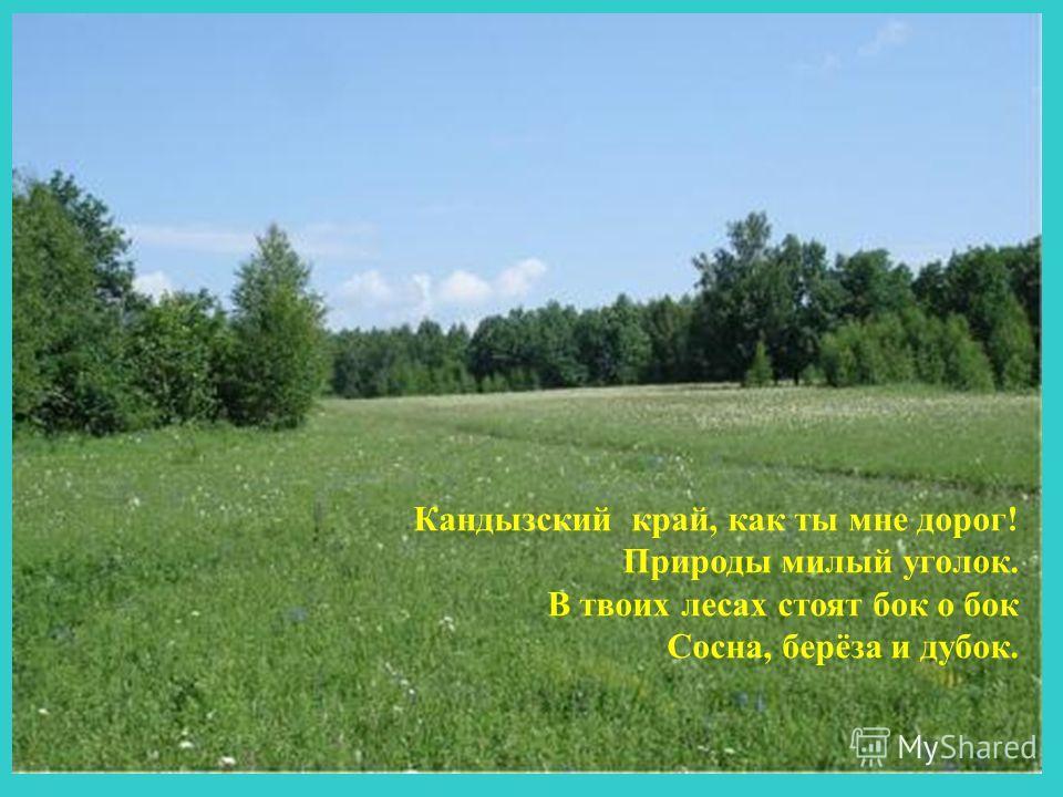 Кандызский край, как ты мне дорог! Природы милый уголок. В твоих лесах стоят бок о бок Сосна, берёза и дубок.