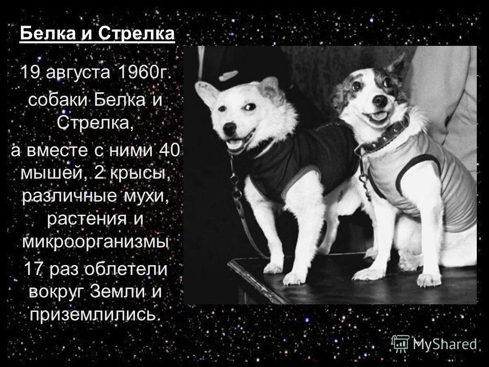 Белка и Стрелка 19 августа 1960 г. собаки Белка и Стрелка, а вместе с ними 40 мышей, 2 крысы, различные мухи, растения и микроорганизмы 17 раз облетели вокруг Земли и приземлились.