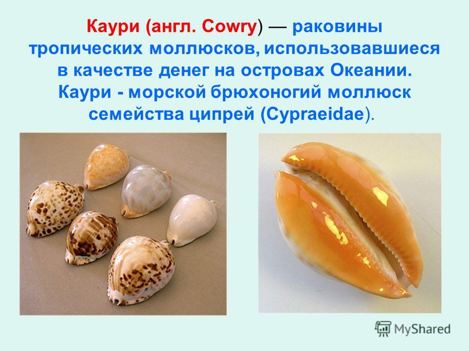 Каумри (англ. Cowry) раковины тропических моллюсков, использовавшиеся в качестве денег на островах Океании. Каумри - морской брюхоногий моллюск семейства ципрей (Cypraeidae).