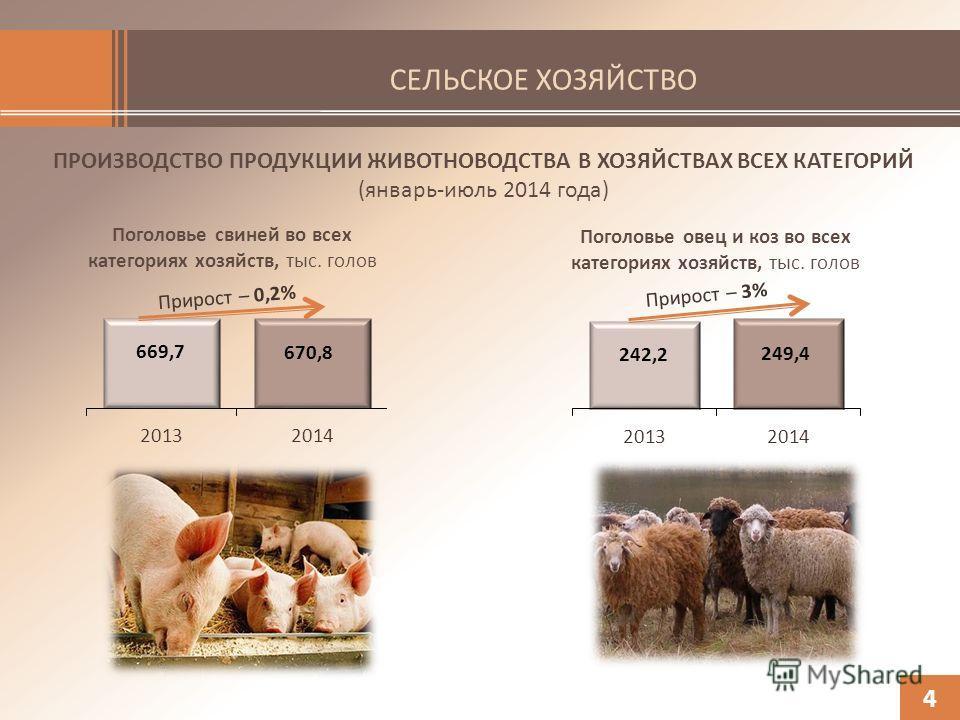 СЕЛЬСКОЕ ХОЗЯЙСТВО ПРОИЗВОДСТВО ПРОДУКЦИИ ЖИВОТНОВОДСТВА В ХОЗЯЙСТВАХ ВСЕХ КАТЕГОРИЙ (январь-июль 2014 года) 4 Поголовье овец и коз во всех категориях хозяйств, тыс. голов Поголовье свиней во всех категориях хозяйств, тыс. голов