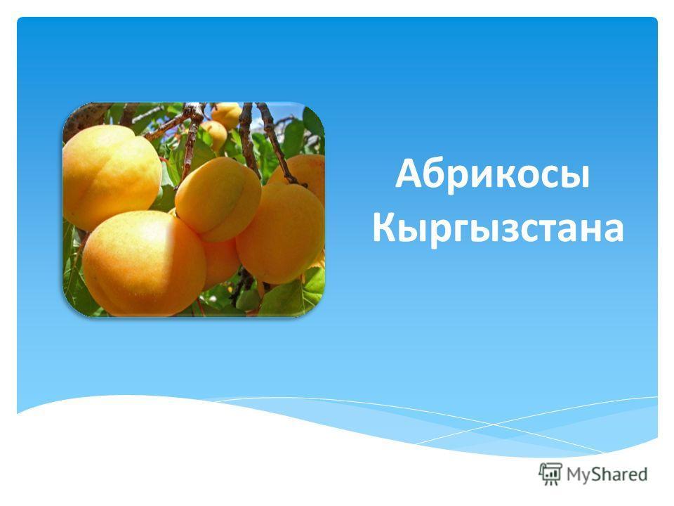Абрикосы Кыргызстана